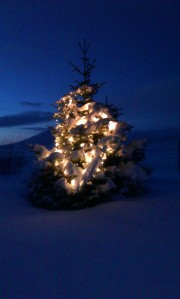 So much snow in Iceland, that the christmas tree is fully covered